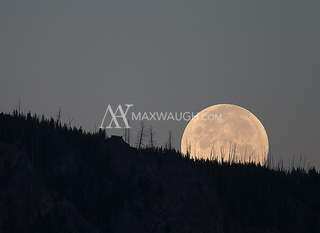 "The ""super moon"" sets on Yellowstone."