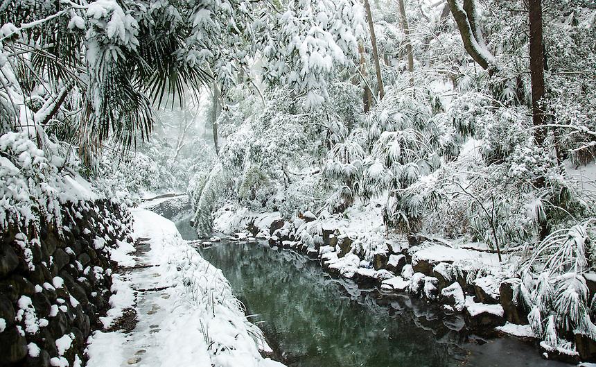 Todoroki Valley,Tokyo Snow - heaviest in 46 years