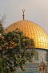 Israel, Jerusalem. Mediterranean Hackberry (Celtis Australis) on Temple Mount