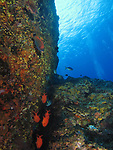 Orchid Island (蘭嶼), Taiwan -- Soldierfish in a crevice at Jichang Waijiao (機場外礁)