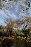 Israel, Upper Galilee. Tel Dan Nature Reserve