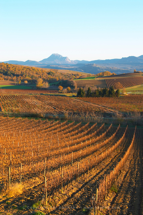 View over the vineyards at Conhilac de la Montagne. Peyrepertuse Limoux. Languedoc. Evening sunshine. France. Europe. Mountains in the background.