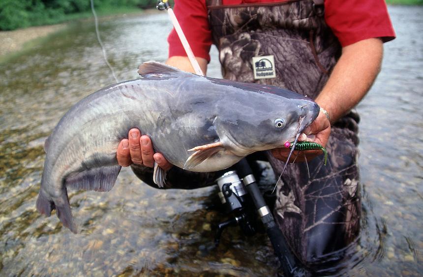 Blue catfish caught using a jig in the Saline River, Arkansas