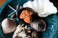 Sea Treasures at the Tongan Beach Resort, Tonga