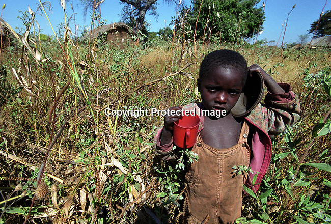 dicomal00006 Malawi. An unidentified boy walking trough his fathers badly grown maize field on June 11, 2002 close to Lilongwe river in Salima district in Malawi. Malawi has been hit by floods and sever drought and a food crisis is looming in the country. Salima district is one of the worst affected by the food crisis in Malawi..©Per-Anders Pettersson/iAfrika Photos