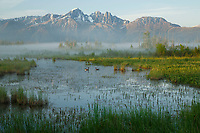 Summer Landscape of Palmer Hayflats Refuge with Canadian Geese and Twin Peaks of Chugach Mountain Range  Southcentral, Alaska<br />   <br /> <br /> (C) Jeff Schultz/SchultzPhoto.com