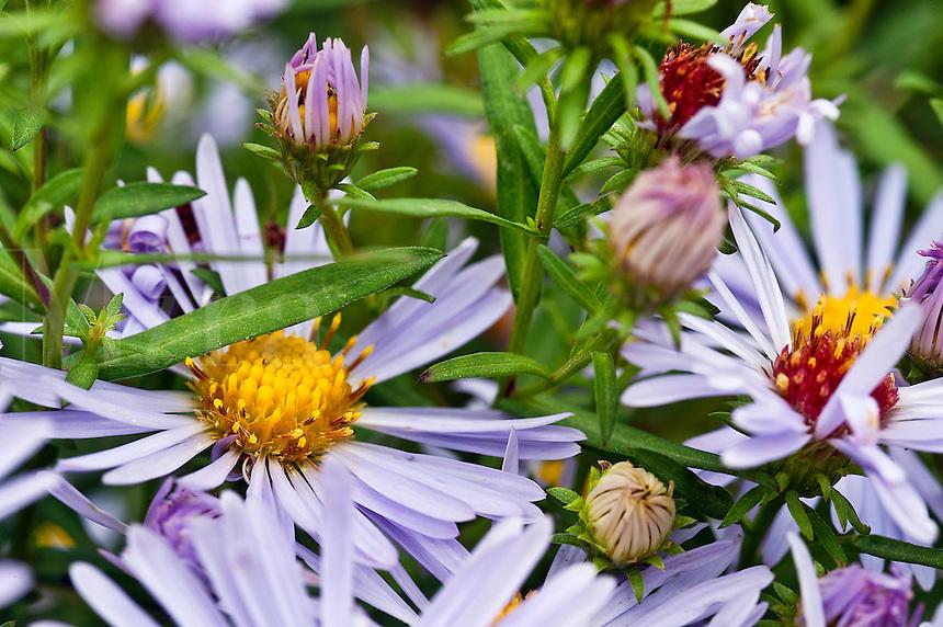 Wildflowers in bloom.