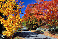 New Hampshire, East Andover, NH, Colorful fall foliage along Maple Street in East Andover in the fall.