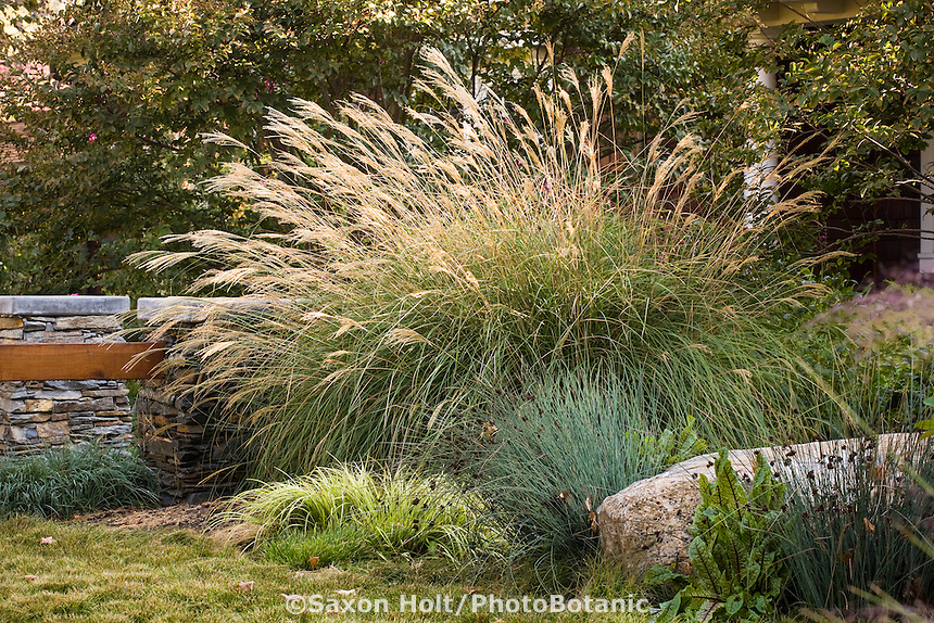Ornamental grass garden border with Miscanthus, Juncus, Acorus and Carex lawn in California front yard meadow garden