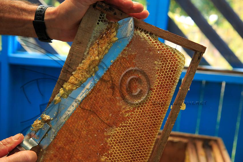 A honey frame being extracted.///Un cadre de miel à l'extraction.