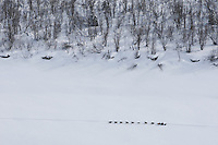 Jeff King runs down the Yukon River between Grayling and Eagle Island on Saturday afternoon    Iditarod 2009