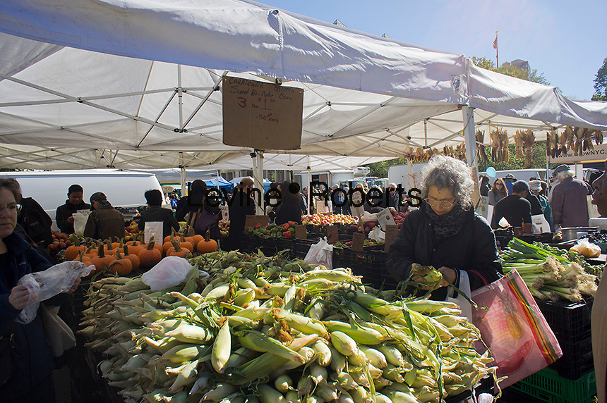 Shoppers choose bi-color corn at the Union Square Greenmarket in New York on Saturday, October 13, 2012.   (© Richard B. Levine)