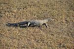 Yala National Park Sri Lanka<br /> Land Monitor