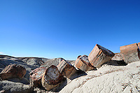 Petrified Forest National Park in Arizona
