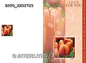 Alfredo, FLOWERS, BLUMEN, FLORES,  photos+++++,BRTOXX02725,#F#