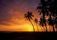 Tropical Palm Trees at Sunset, Kona Coast, Big Island, Hawaii, USA.