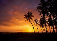 Tropical Palm Trees at Sunset, Kona Coast, Big Island, Hawaii, USA.