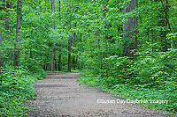 63895-14716 Trail at Ferne Clyffe State Park, Johnson Co. IL