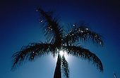 Florida, USA. Palm tree silhouetted against silver sunburst at Holiday Isle Resort on Isla Morada.