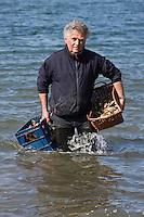 Europe/France/Bretagne/29/Finistère/Lannilis/Prat-Ar-Coum: Yvon Madec ostréiculteurors d'une dégustation d'huitres rapporte une  bourriche d'huitres et une caisse de Muscadet -Vin qu'il met à vieillir sosu l'eau au fond de l'aber-Huitres de Prat-Ar-Coum [Non destiné à un usage publicitaire - Not intended for an advertising use]