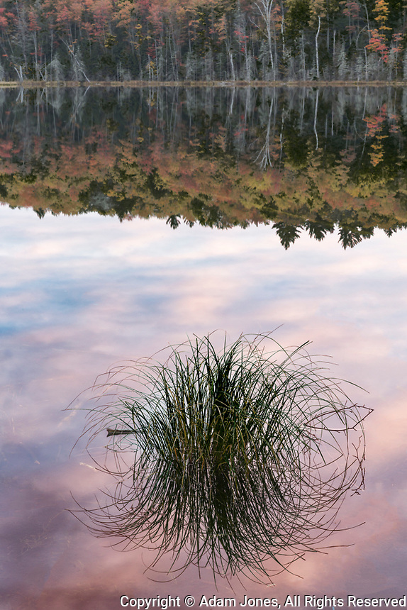 Tuft of grass and morning sky reflection, Irwin Lake, Hiawatha National Forest, Upper Peninsula of Michigan.