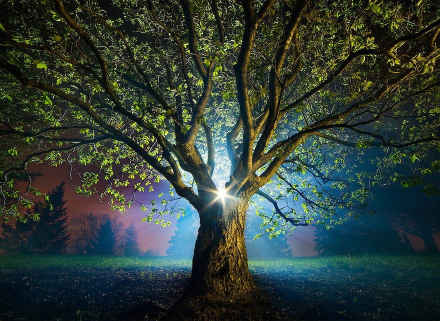 """This is """"The Old Man of the Forest"""". I took this April 28, 3:35 a.m. using a flashlight on a stand behind the tree and a fog machine off to the right in Chaska, MN. The tree is a 50-year-old Japanese Lilac, and stands less than 4 feet tall. The camera was about 2 feet from the trunk."""