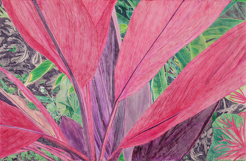 Cerise Leafed Plant. Ankobra River. (Axim, Western GH.) Continental Drift. <br /> Color Pencil on paper. 26&quot; x 40&quot;. Judy Byron. 2014<br /> Photo credit: Rick Reinhard