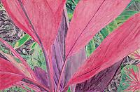 "Cerise Leafed Plant. Ankobra River. (Axim, Western GH.) Continental Drift. <br /> Color Pencil on paper. 26"" x 40"". Judy Byron. 2014<br /> Photo credit: Rick Reinhard"