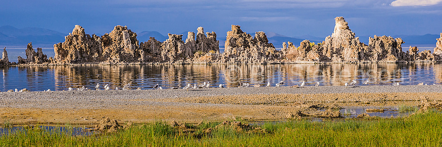A panorama image of tufa towers and seagulls at Mono Lake in California. The unusual formations are called tufa towers. They originally formed underwater as minerals collected around hot water vents. The water has been lowered exposing these interesting features.