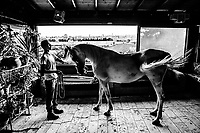 Fares Salim, 22, displays a white mare out of her stall. as the minarets and steeples of Jerusalem's Old City and the golden Dome of the Rock is seen on June 07, 2016 at a stable above the Garden of Gethsemane in Tur, East Jerusalem. <br /> Photo Daniel Berehulak for the New York Times