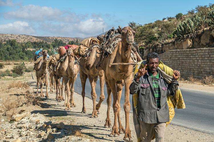 Afar camel caravan carrying salt from the Danakil Depressiont to Mekele