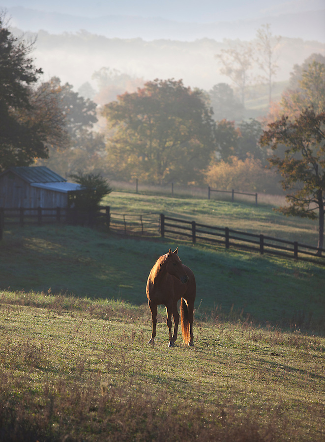 Horse in the morning light on a farm in rural virginia. Credit Image: © Andrew Shurtleff