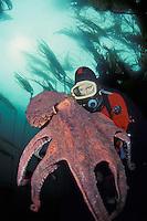 Diver (MR) and giant Pacific octopus, Octopus dolfleini. British Columbia, Canada.