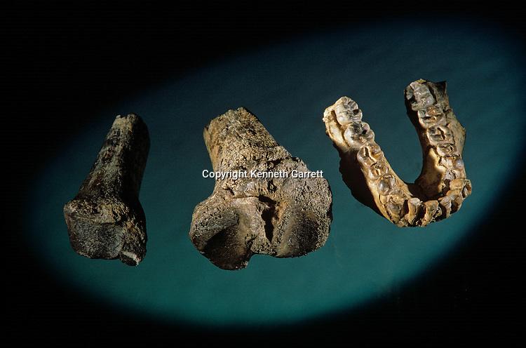 bone fragments, Allia Bay stie, Turkana, Africa; tibia 4.1 million years old, KNM-KP 29285.