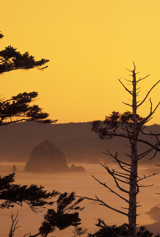 Haystack Rock framed by trees at sunrise, Cannon Beach, Oregon