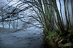 A river moving through woodland with mist