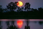 Sunset through palms and acacias, reflections in marsh, Ngamiland, Okavango Delta, Botswana