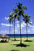 Itaparica Island, Bahia, Brazil. Blue sea, blue sky, four palm trees and a thatched sun shade.