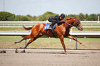 #161Fasig-Tipton Florida Sale,Under Tack Show. Palm Meadows Florida 03-23-2012 Arron Haggart/Eclipse Sportswire.