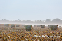 63801-07616 Hay bales in field on foggy morning, Marion Co. IL
