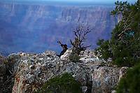 Aug. 22, 2014; GRAND CANYON, AZ, USA; Visitor on the south rim of the Grand Canyon takes photographs with a camera from behind a tree at sunset in northern Arizona. The canyon has been formed over millions of years by the Colorado River cutting its way through the desert. Mandatory Credit: Mark J. Rebilas