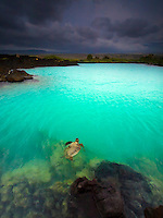 At sunset, a honu (green sea turtle) swims in the beautiful turquoise water of Kiholo Bay, Big Island.