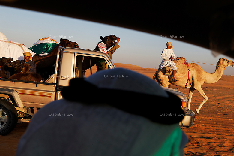 The Mohamed Khamisi family parades their camels for all their neighbors to adire.