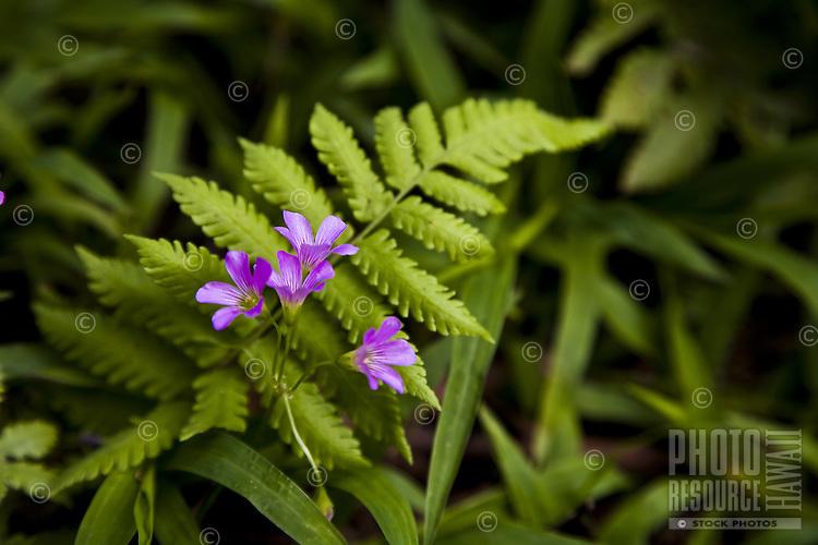 Purple flowers creeping through a fern leaf