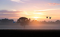 01/09/16<br /> <br /> As the sun rises over misty fields near Sudbury, Derbyshire, a pair of white doves take to the sky on the first day of autumn.<br /> <br /> All Rights Reserved, F Stop Press Ltd. +44 (0)1773 550665