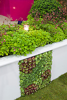 Sempervivum succulents vertical planting in wall, growing plants upward in unusual way sideways, with herbvs at top, garden lighting illumination lamp