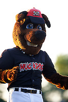 Batavia Muckdogs mascot Homer in between innings for an on field promotion during the second game of a doubleheader against the Mahoning Valley Scrappers on July 2, 2015 at Dwyer Stadium in Batavia, New York.  Mahoning Valley defeated Batavia 3-0.  (Mike Janes/Four Seam Images)