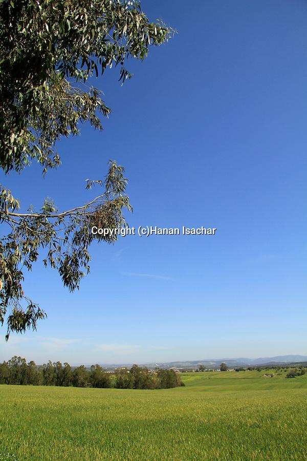 Israel, Shephelah, fields by Haruvit forest