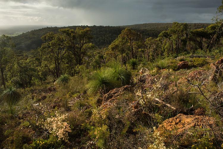 Jarrah forest in Serpentine, Western Australia