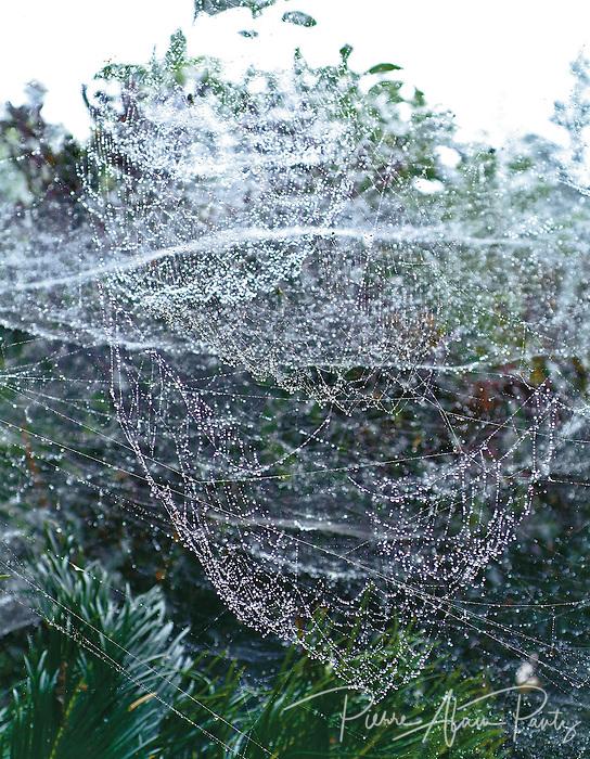Toile d'araignée, col d'Amieu